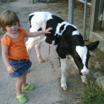 Give the gift of free dairy products for life!